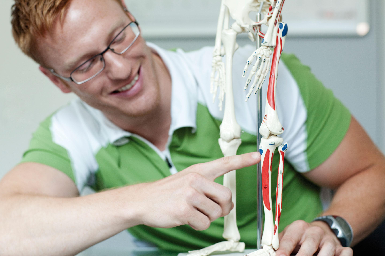 S & H: Anatomie und Muskelaufbau